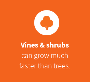 Vines and shrubs grow faster than trees