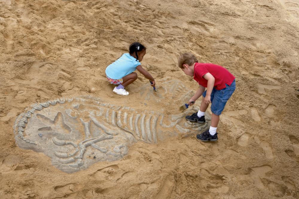 Origins Fossils
